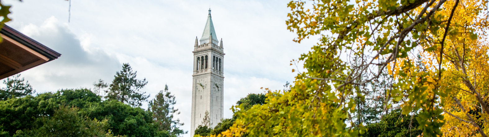image of the campanile through trees with yellow flowers