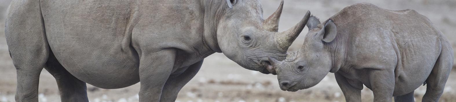slider-rhinos_0.jpg