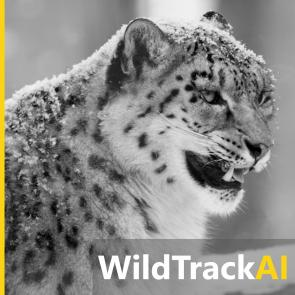 WildTrackAI