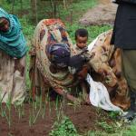 Rural farmers learn agricultural techniques at a farmer field school in Jimma, Ethiopia (photo: Sarah Van Wart)