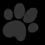 logo_lightergray_medium_avenir-11-11.png