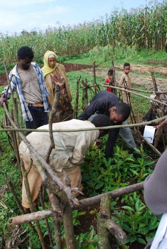 Rural farmers, such as these in Jimma, Ethiopia, could benefit from students' proposals (photo: Sarah Van Wart)