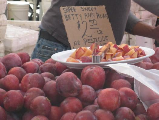 <b>Consumers:</b> Buying locally-grown plums at the Berkeley Farmers' Market